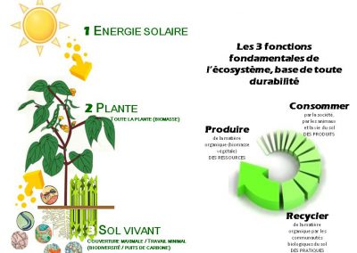 Les principes de l'agriculture durable