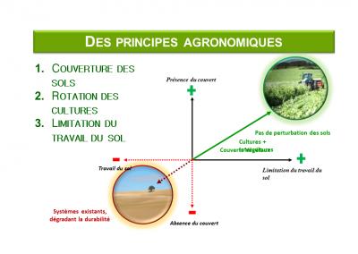 Les principes agronomiques de l'agricuture de conservation des sols