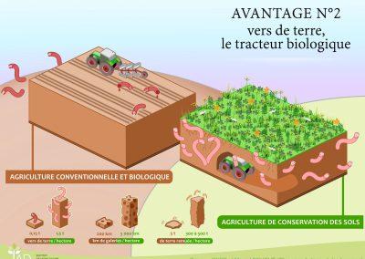 Avantage 2 - Les vers de terre, véritable tracteur biologique