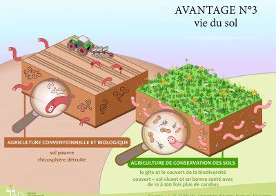 Avantage 3 - La vie du sol