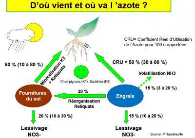Cycle de l'azote