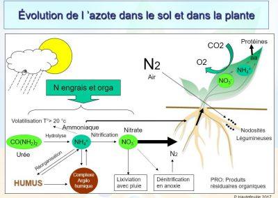 Cycle de l'azote dans les sols